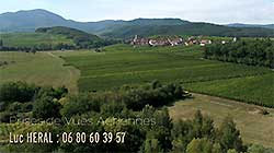 Photo Vendange-Alsace